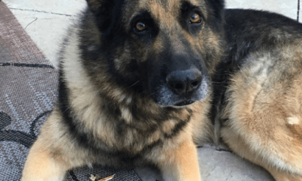 "Tulsa Police K9 Dies: ""He Was Just A Part Of My Family"""