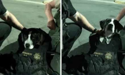 Abandoned Dog Tied To a Tree Made An Honorary K9 Officer