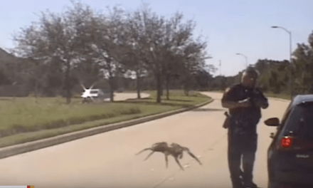 Watch Giant Spider Attack Police Officer…..Sort of….