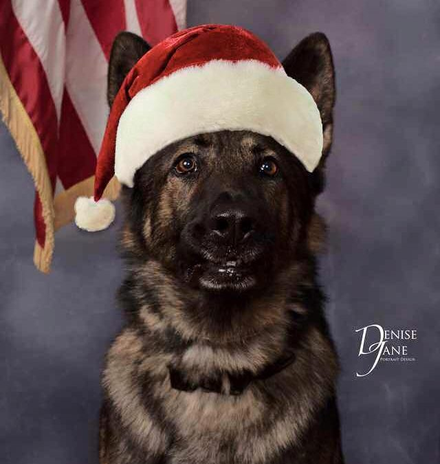 Virginia Agency Wishes 'Merry Christmas' K9 Style