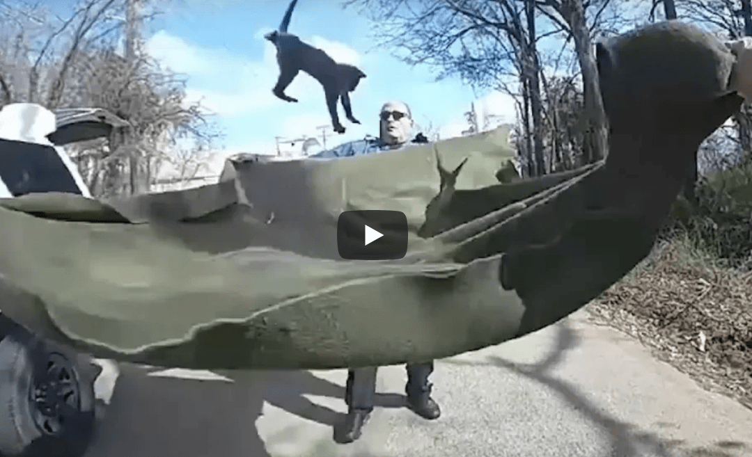 Watch: Police Catch Cat Falling From Tree