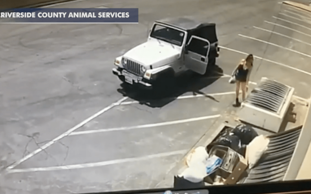 Video Catches Woman Dumping Newborn Puppies by Dumpster