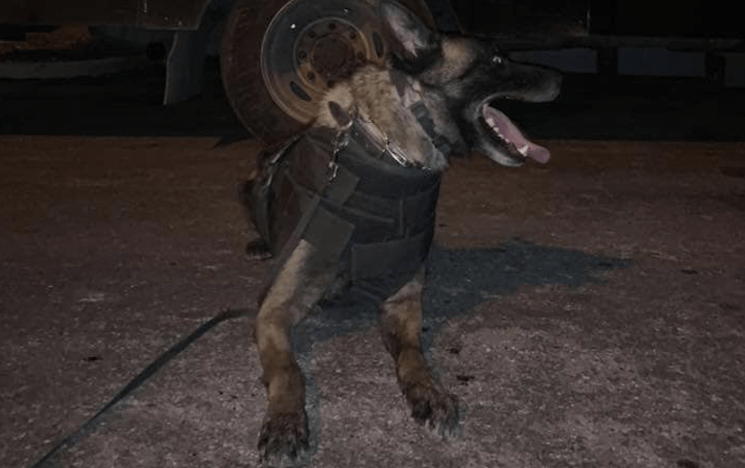 Robbery Suspect Stabs Police Service Dog in Neck Twice During Apprehension