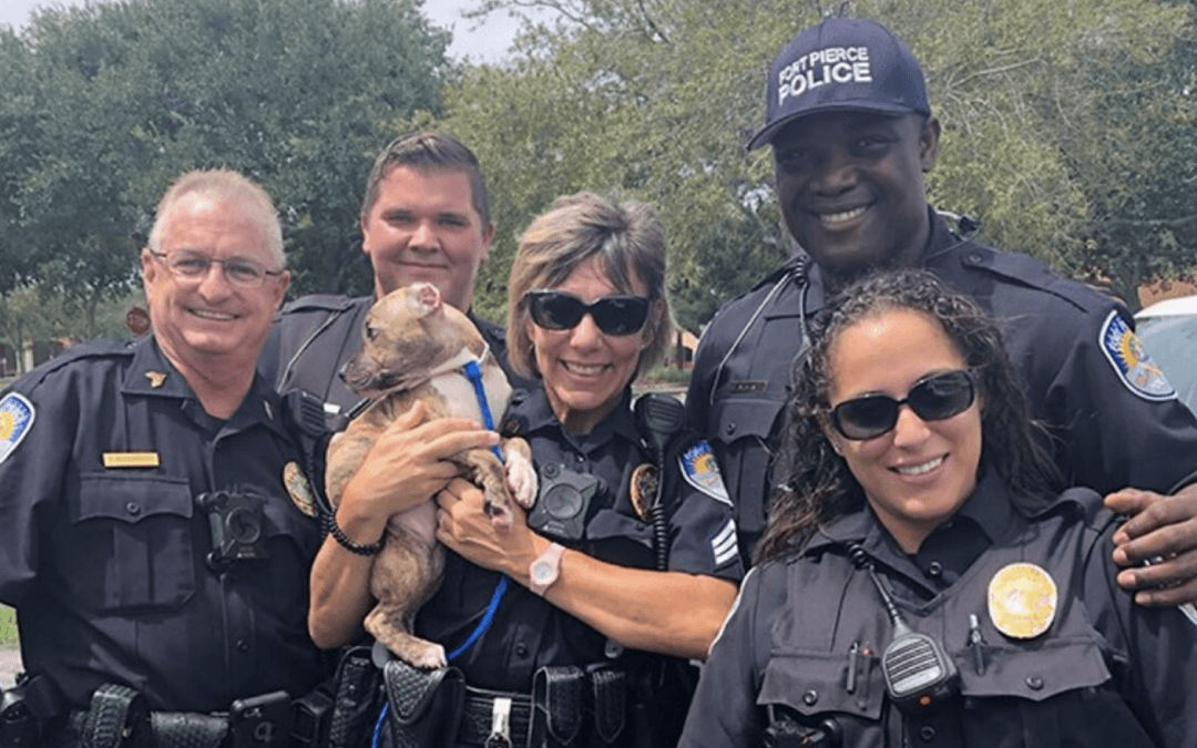 Fort Pierce police make 'hurricane rescue' of small pup