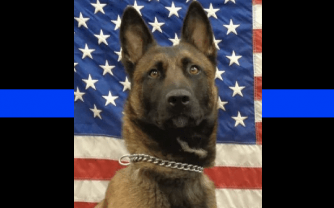 Police K9 Luna dies of toxic poisoning