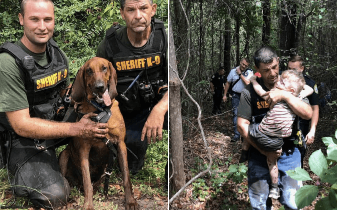 Sheriff's bloodhound finds missing autistic boy in less than 30 minutes