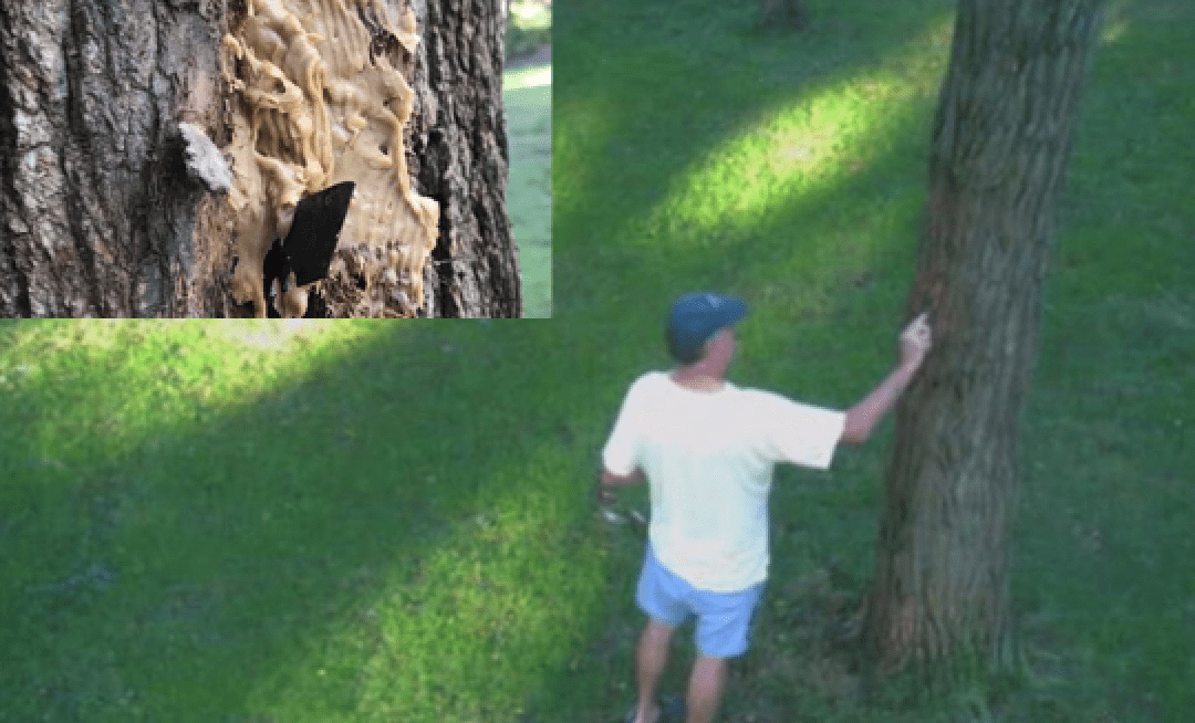 Cape Cod man accused of baiting razor blade with peanut butter to injure squirrels
