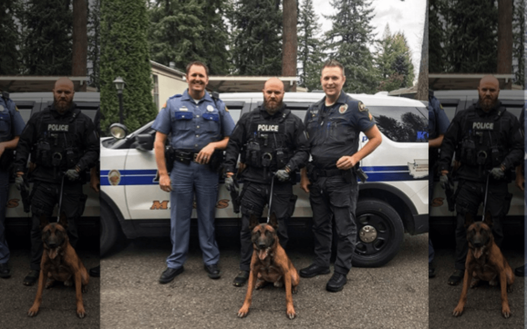 K9 Steele captures fleeing woman after multiple vehicle pursuits