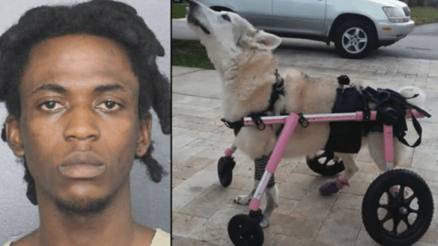 Detectives nab bandit responsible for auto theft that caused death of disabled dog